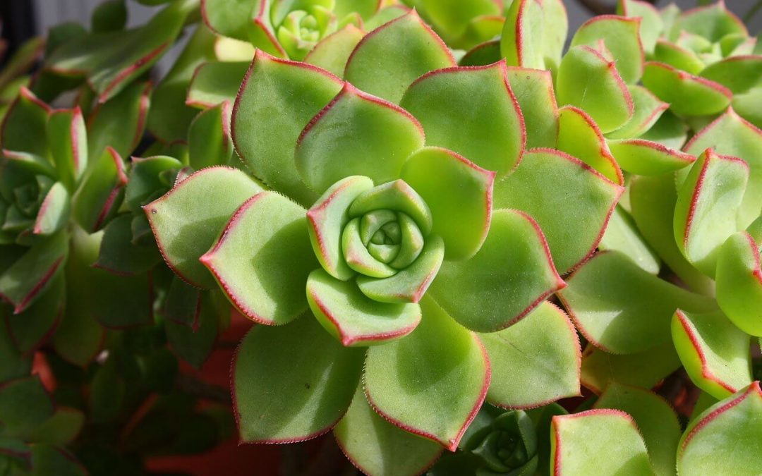 Non-Toxic Plants to Enjoy Inside and Outdoors
