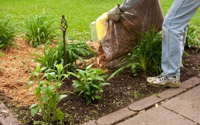 4 Fall Landscaping Tips to Follow Before Summer Ends
