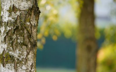 3 Signs You Need to Remove a Tree From Your Property